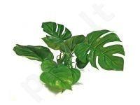 Plastikinis augalas ANUBIAS 15cm