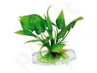 Plastmasinis augalas LAGENANDRA BOTTOM