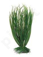 Plastmasinis augalas ACORUS vidutinis 18cm