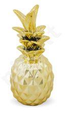 Dekoracinis Ananasas